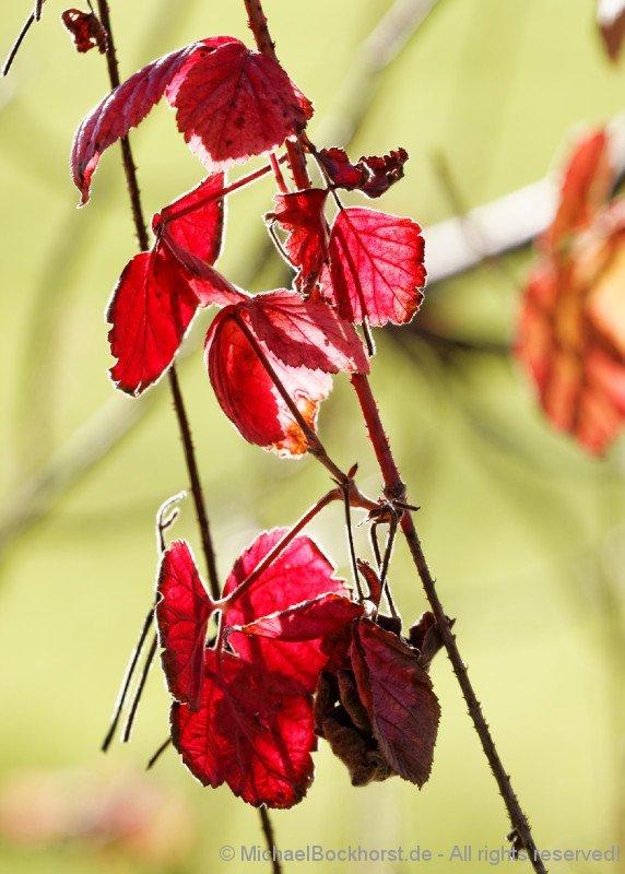 IMG_40d2_027322_fall_colors_bockhorst