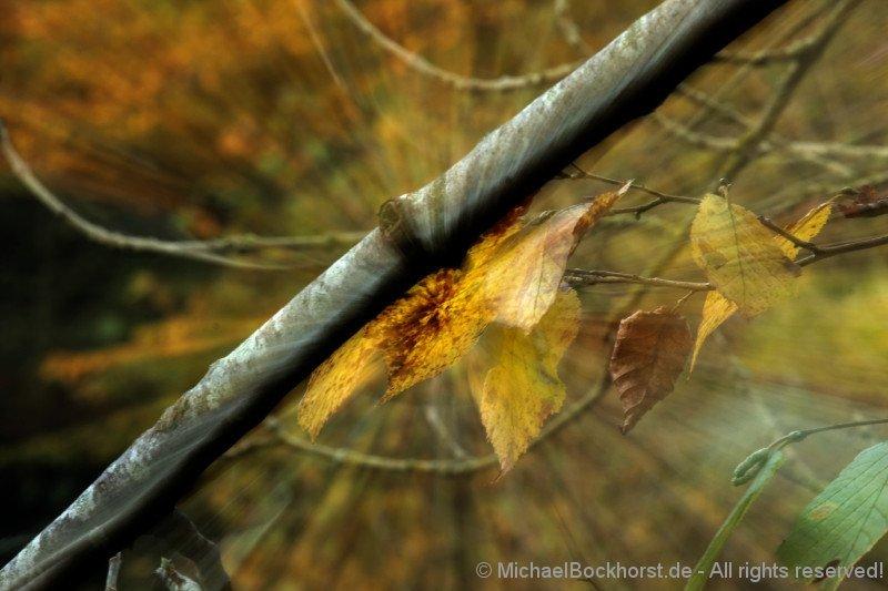 IMG_40d2_027413_fall_colors_bockhorst