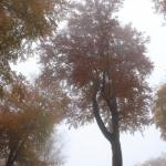 IMG_2272_autumn_2015_ii_5d2
